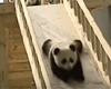 Cute panda on slide movie